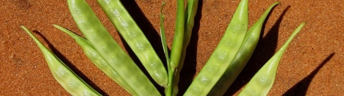 Natural Factors Required for Guar Plant Growth