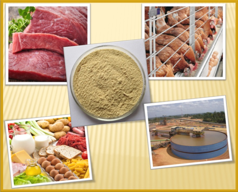cassia gum powder in meat and poultry products