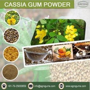 Cassia Powder Manufacturer