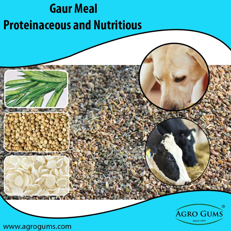 Benefits of Guar Meal for Animals